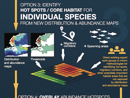 Marine life and habitat data development and synthesis to support the Northeast Ocean Plan and Northeast Ocean Data Portal
